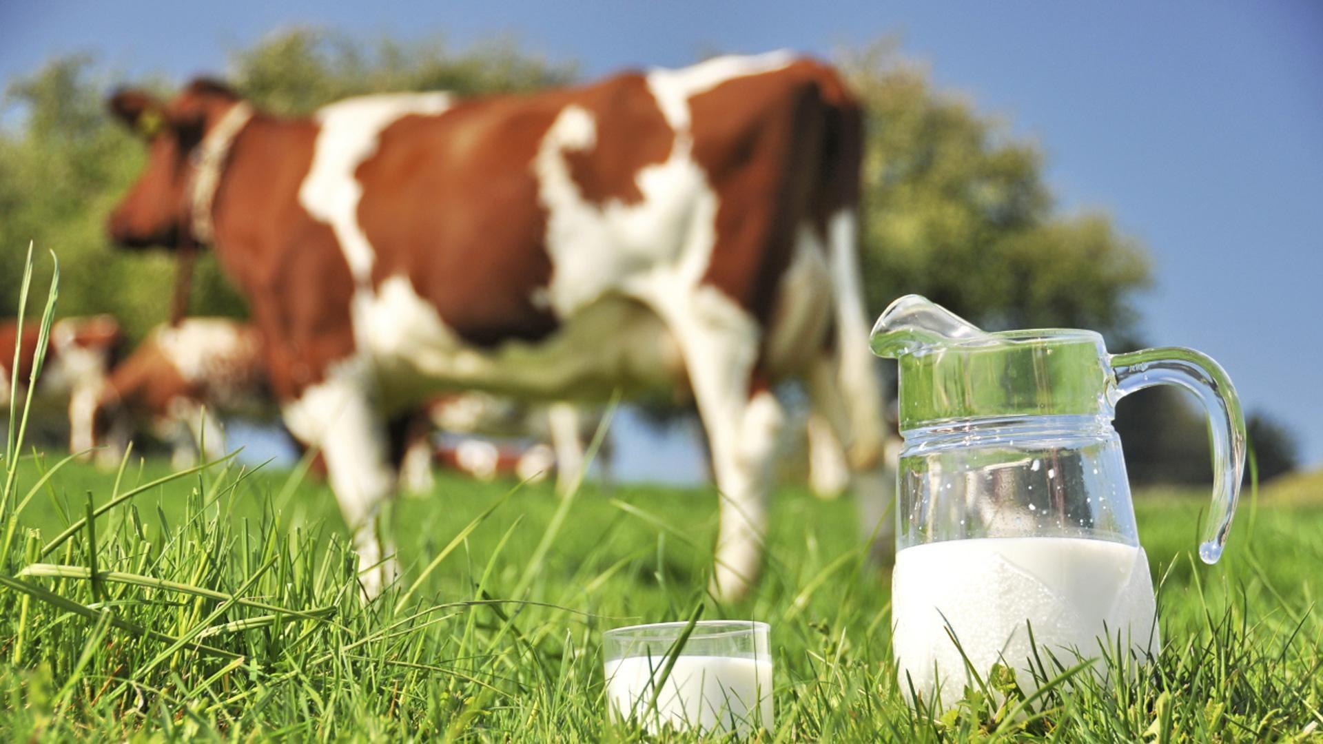 Comparaison lait de vache et lait de soja.